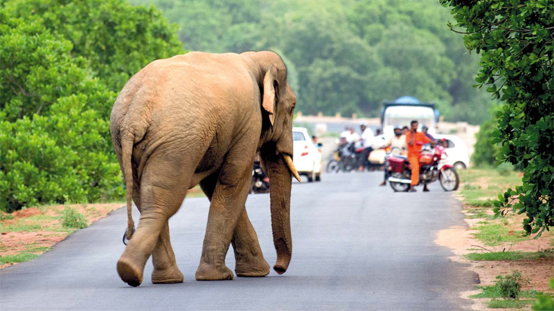 Human-elephant Conflict : Victims to get high compensations
