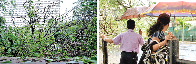 Torrential rain, Wind uproot trees, cause for traffic on main roads...