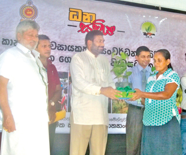 Boost for export crop cultivation