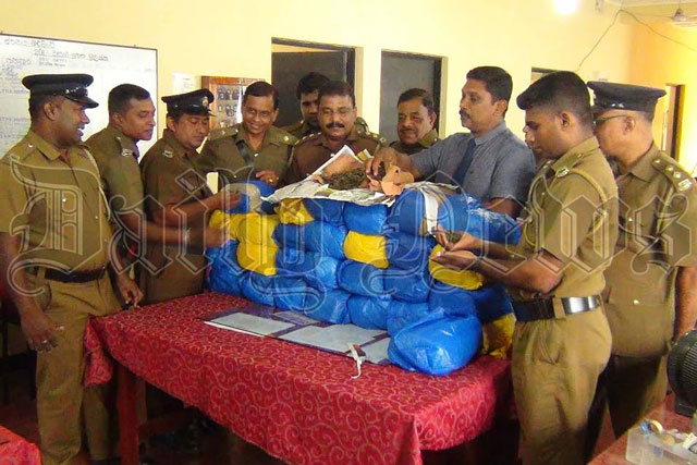 Two arrested in Madampe for possession of Kerala Ganja