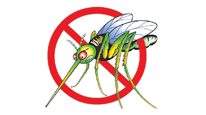 Schoolchildren affected by dengue increase by 20%