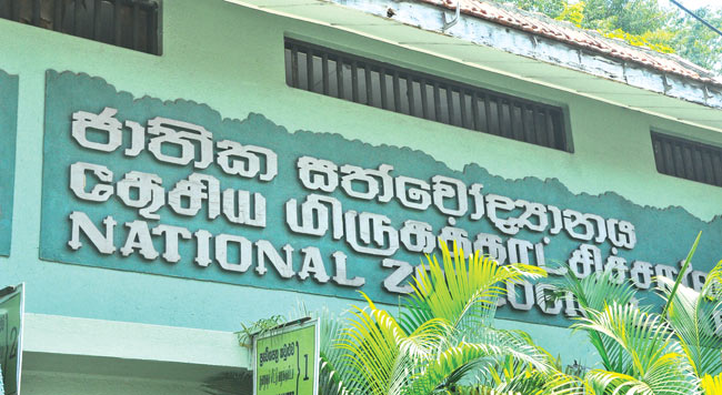 Dehiwala Zoo will be open until 10pm