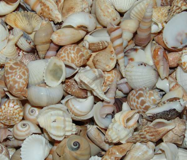 Man arrested for illegally transporting seashells