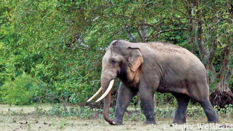 Renewed calls for GPS tracking collars for endangered tuskers