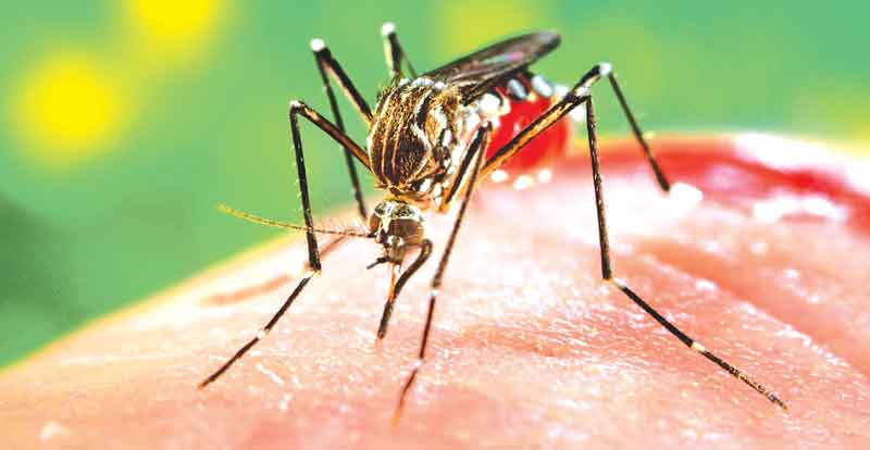 Red Cross scales up response to dengue: Over 100, 000 affected