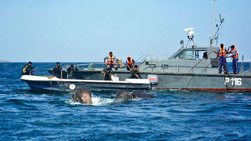 Navy rescues two more jumbos at sea in Trincomalee