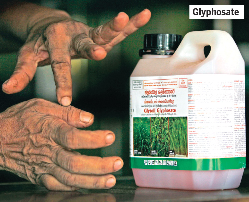 Is the herbicide Glyphosate safe? | Daily News