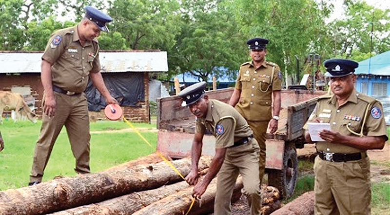 Police with the seized timber. Picture by Sivam Packiyanathan, Batticaloa Special Corr.