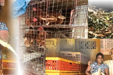Chickens at Mohamed's shop-Crows pick mounds of banana skins which are to be trucked out