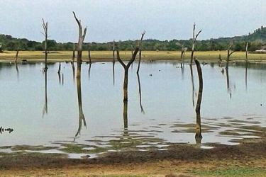 A tank affected by drought in Ampara. Picture by I.L.M.RIZAN, Addalaichenai Central Correspondent