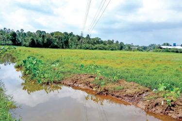Cultivated paddy land