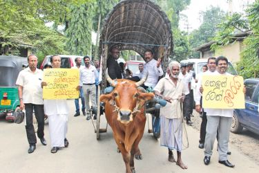 The five council members travelling in a bullock cart to attend yesterday's Wayamba Provincial Council meeting. Picture by Kurunegala additional correspondent.