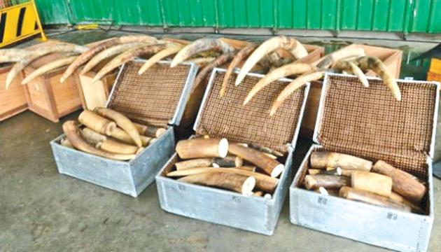 New York City is a hub of illegal elephant ivory trade, ahead of California and Hawaii.- AFP