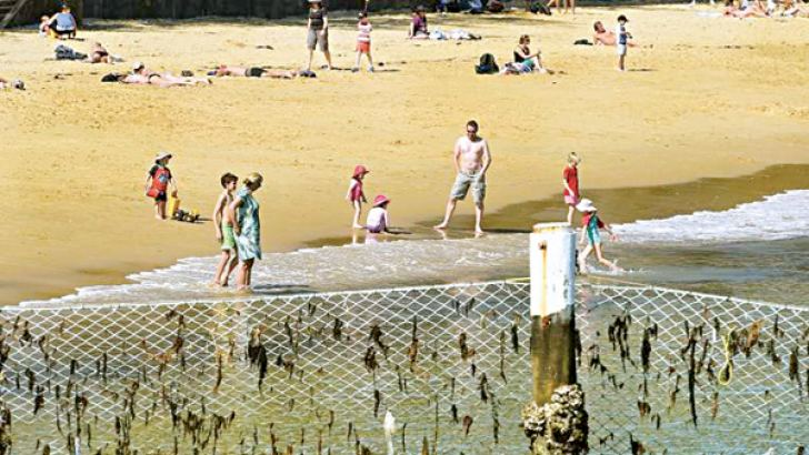 Children play on a beach behind a shark net at Manly Cove. - AFP