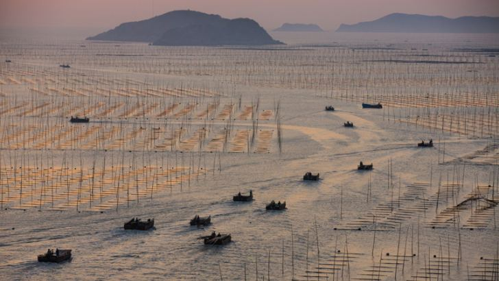 At dawn on China's Fujian coast, seaweed farmers head out to tend their aquatic fields. Such farms help China grow 12 million tons of food a year with no soil or fresh water and no fertilizer except runoff from the land. Oceans cover 71 percent of earth yet provide less than 2 percent of our food—for now. Picture by George Steinmetz