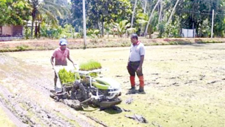 The new paddy planting machine in a paddy field. Picture by Lunama Group Corr