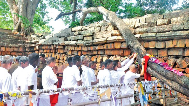 Prison inmates engage in religious observances at the Jaya Sri Maha Bodhi. Picture by Anuradhapura Central Group Corr.