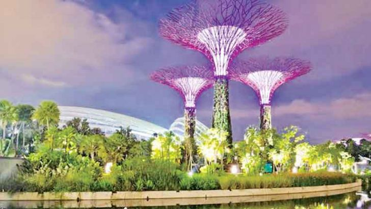 Night view of the Supertrees Grove at Gardens by the Bay in central Singapore, adjacent to the Marina Reservoir.