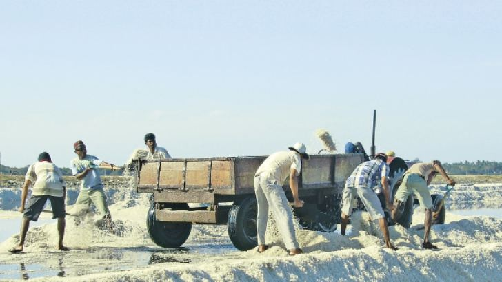 Salt harvesting in progress. Picture by Tissamaharama special corr