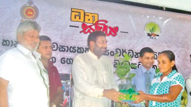 A plant being  handed over. Picture by Eheliyagoda Special Correspondent.