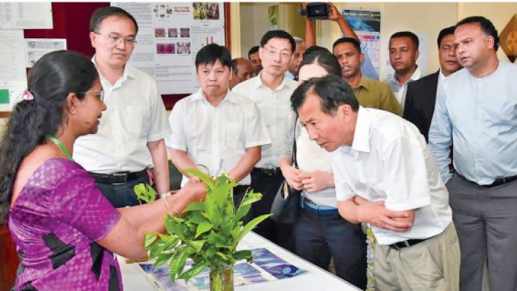 Minister of Plantation Industry Navin Dissanayake and Chinese Agriculture Deputy Minister Chen Xiaohua inspected Sri Lanka Tea Research Institute in Talawakele recently. They also had discussions of exporting  ice tea and green tea between the two countries. Here officials explaining  experiments and research  work of the Tea Research Center to the Chinese delegation.