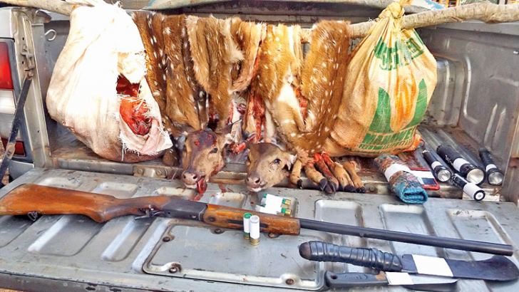 Venison and equipment seized in suspects' possession.  Picture by  Kanchana Ariyadasa