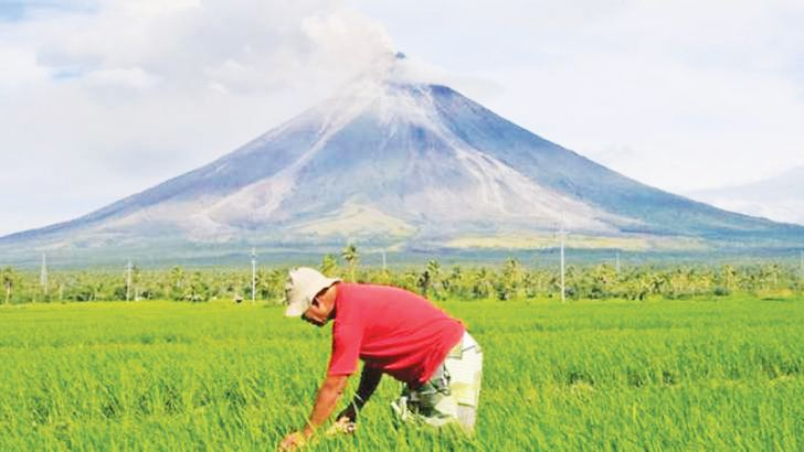 As blistering lava spews from the seething volcano nearby, Philippine farmer Jay Balindang works on his ash-strewn paddy fields in the no-go zone.
